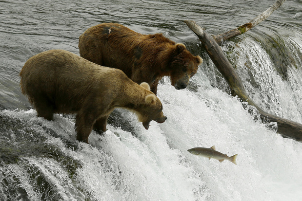 Omstreden mijnproject in Alaska krijgt geen vergunning