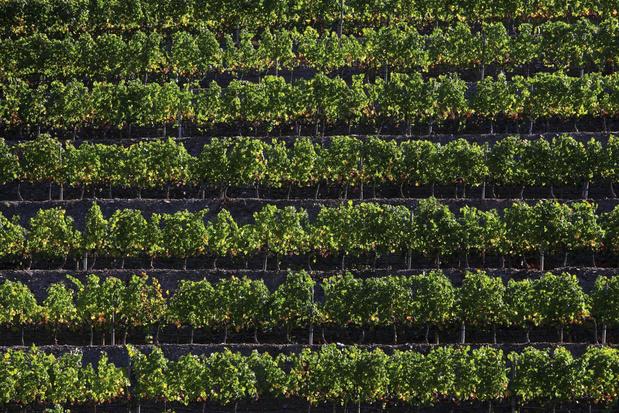 Start van het wildseizoen: maak kennis met wijnen van grenache