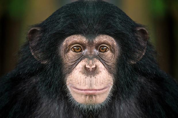 'Hoeveel vrouwen zouden er in hun leven al niet eens voor een primaat gevallen zijn?'