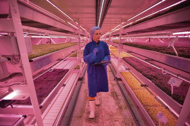 Growing Underground: du bunker souterrain à l'assiette