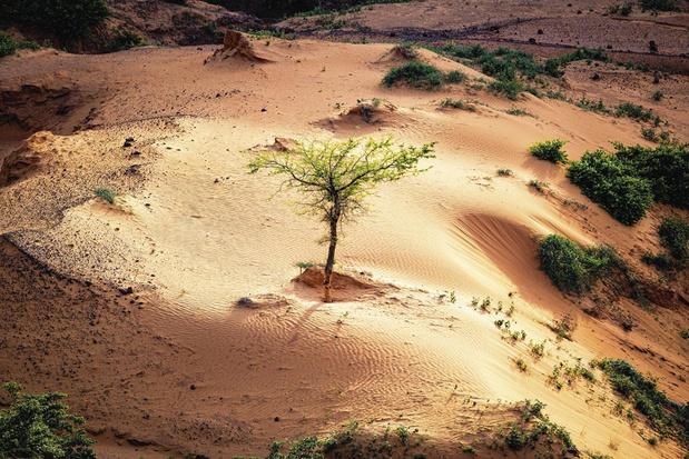 Groen in de Sahel