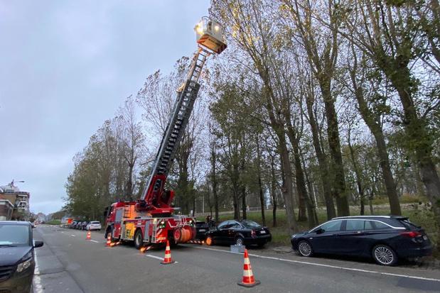 Brandweer verwijdert zware takken die naar beneden dreigen te vallen