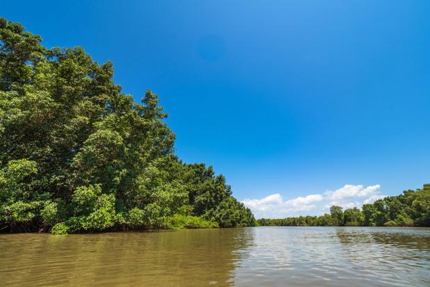 Rechter blokkeert plan van regering Bolsonaro om mangrovebossen niet langer te beschermen