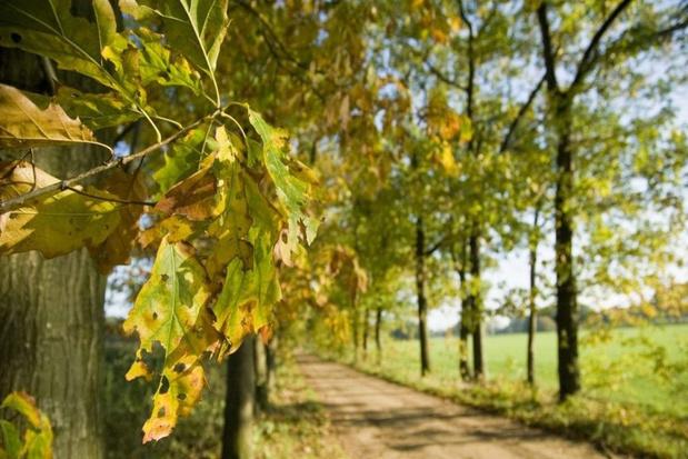 Drie mooie herfstwandelingen in de groene Kempen bij Meerhout