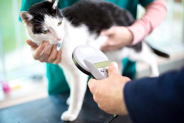 Baasje van gechipte honden en katten moeilijker op te sporen