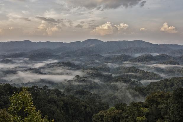 Afrikaanse bergwouden nemen meer koolstof op dan aanvankelijk werd gedacht