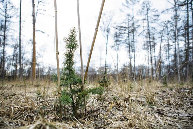 Plus de la moitié des espèces d'arbres sauvages en Europe sont menacées d'extinction