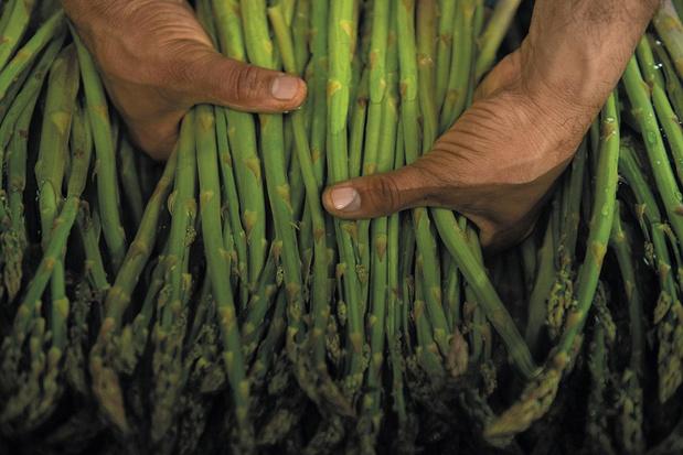 De groene asperge: zoeter en toegankelijker dan zijn witte broertje
