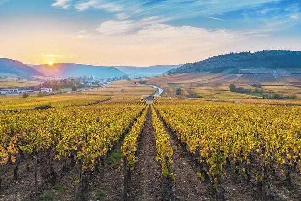 Voor soepele, toegankelijke wijn moet je in het zuiden van Bourgogne zijn