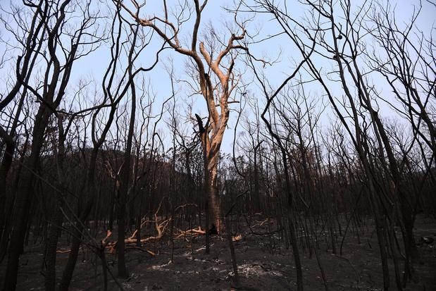Onweersbuien blussen bosbranden in oosten van Australië