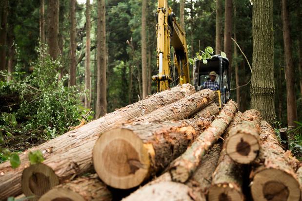 Bomen kappen voor goed bosbeheer