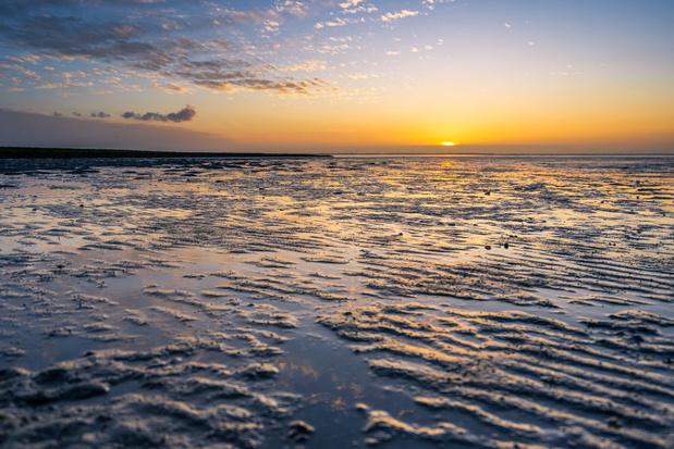 Alsmaar meer exotische dieren en planten in de Noordzee