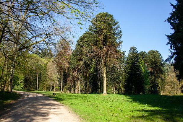 Nieuwe wandelroutes, website en boek om Arboretum van Tervuren te ontdekken