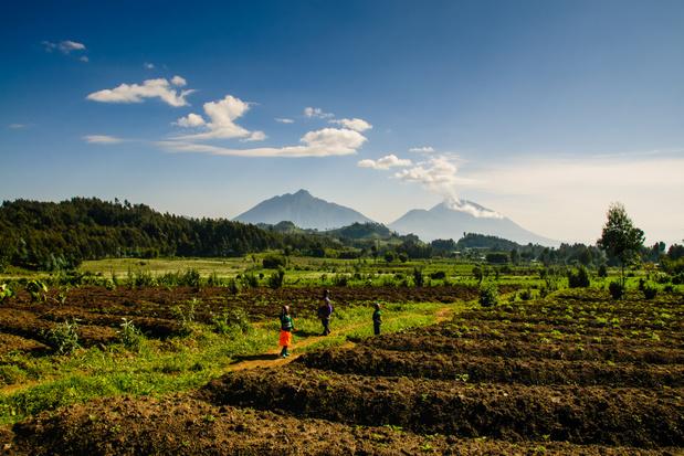 Rwanda maakt visum voor Belgen gratis voor verblijf tot 30 dagen