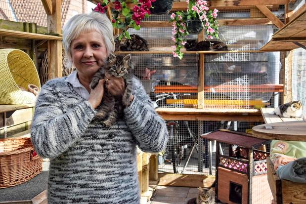 Dodelijk virus treft vzw Katimoe, kattenasiel start crowdfunding