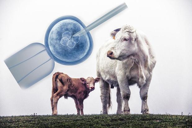 Geknipte koeien