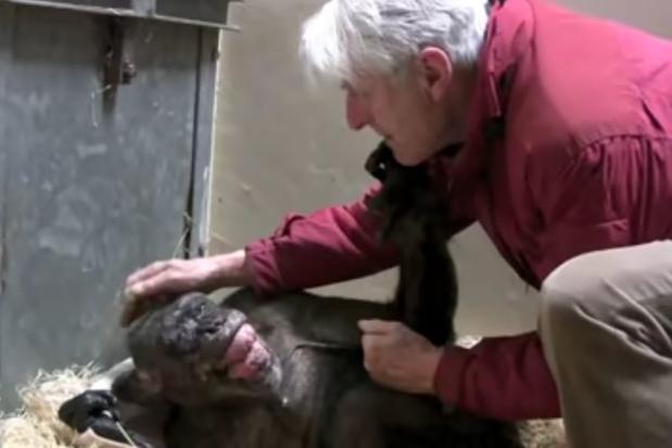 Dieren hebben alle emoties die mensen hebben, schrijft primatoloog Frans de Waal