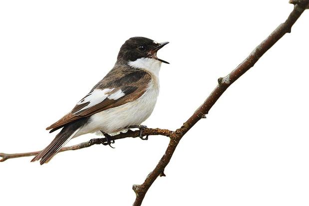 """En mai, tonte à l'arrêt: """"Il faut une réponse politique transversale pour protéger les oiseaux"""""""