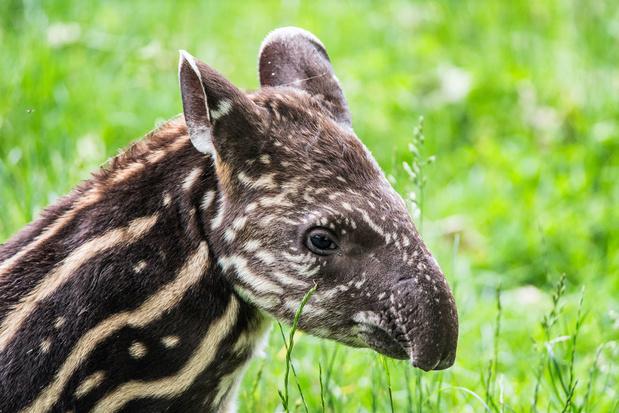 Sinds Columbus is helft wilde dieren verdwenen uit Latijns-Amerika