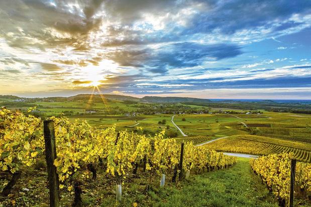 Les vins du Jura, une région qui monte