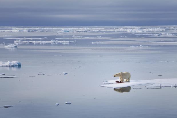 Noordpool zal nog voor 2050 ijsvrij zijn in de zomer