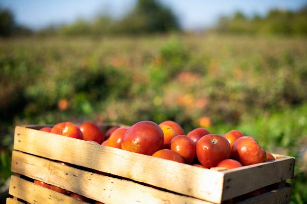 Eén te hete dag kan lokale voedselproductie in problemen brengen