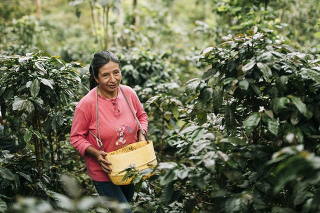 'Klinkt 67 cent per dag als een eerlijk loon? Zo weinig verdient de cacaoboer die voor onze lekkere chocolade zorgt'