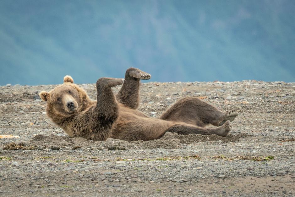 De grappigste dierenfoto's van het jaar: alvast een voorproefje