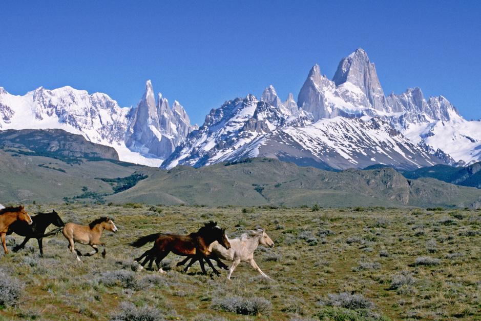 In beeld: paarden die in het wild leven