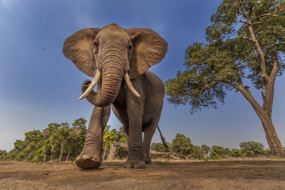 In beeld: natuurschoon en wilde dieren in de nationale parken in Kenia