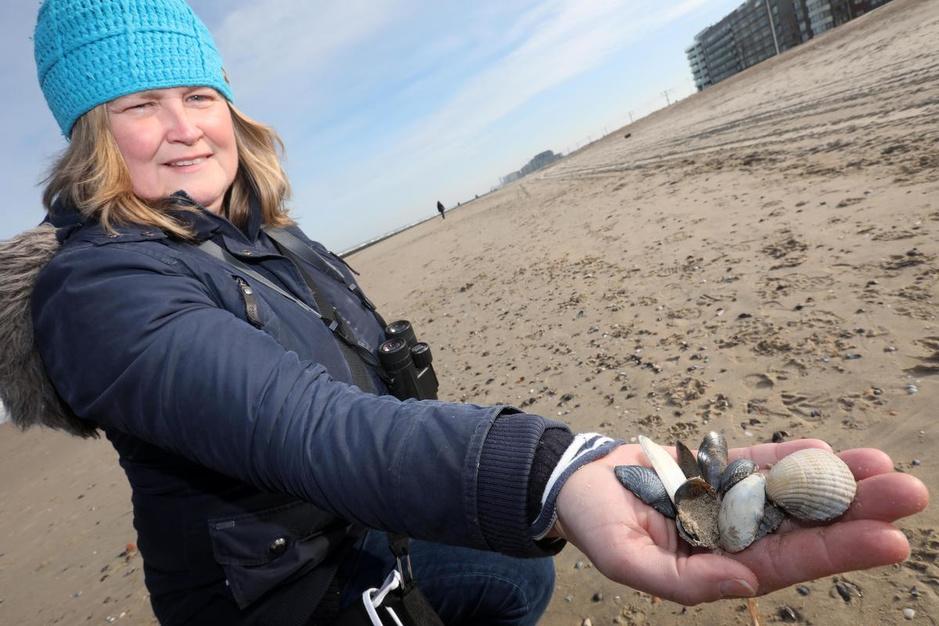 Derde Grote Schelpenteldag: strandjutter Nathalie Colpaert (49) doet mee