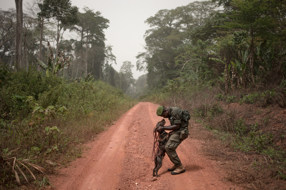 In beeld: rangers maken jacht op stropers van schubdiertjes in de Centraal-Afrikaanse Republiek