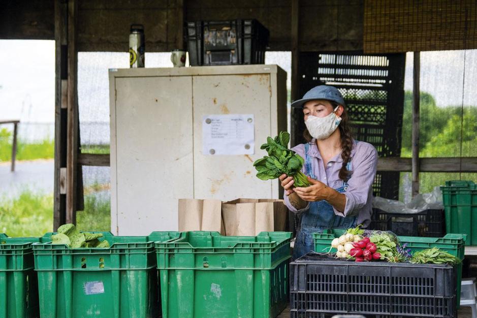 Vers van 't stad: hoe steeds meer steden werken aan hun duurzaam voedselbeleid