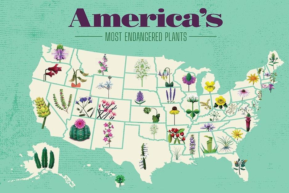 Dit zijn de meest bedreigde planten in de Verenigde Staten