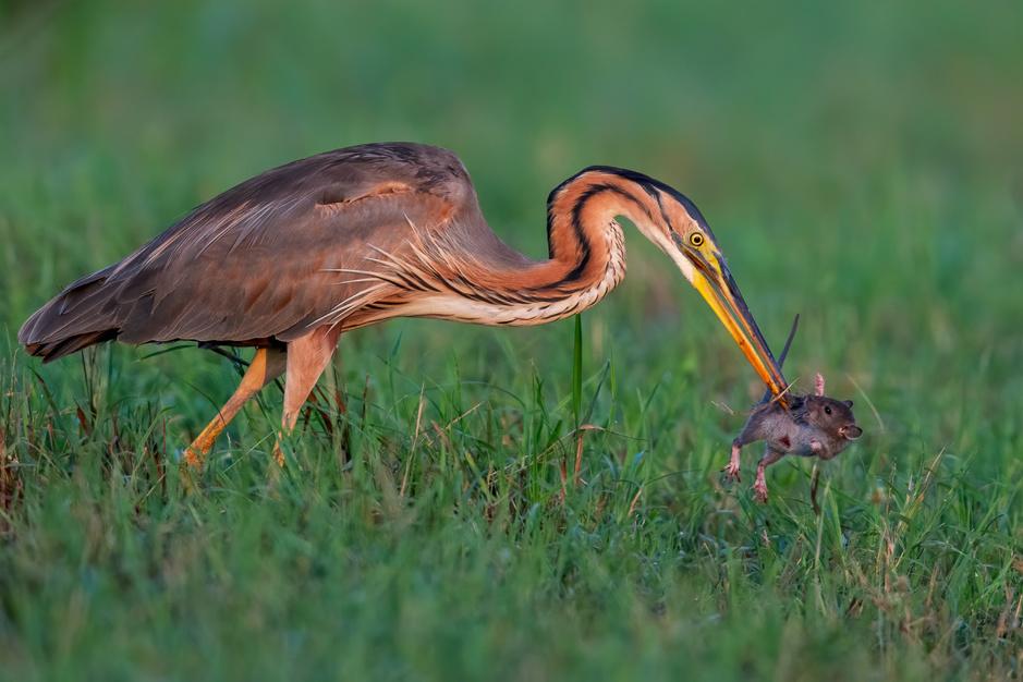In beeld: deze prachtige foto's winnen de Bird Photographer of the Year wedstrijd