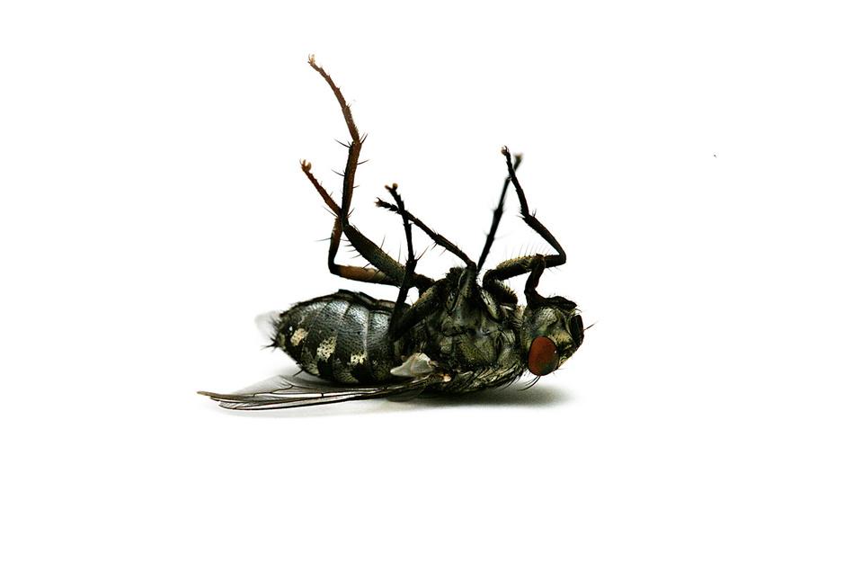 Biodiversiteit: insecten sterven 8 keer sneller uit dan vogels of zoogdieren