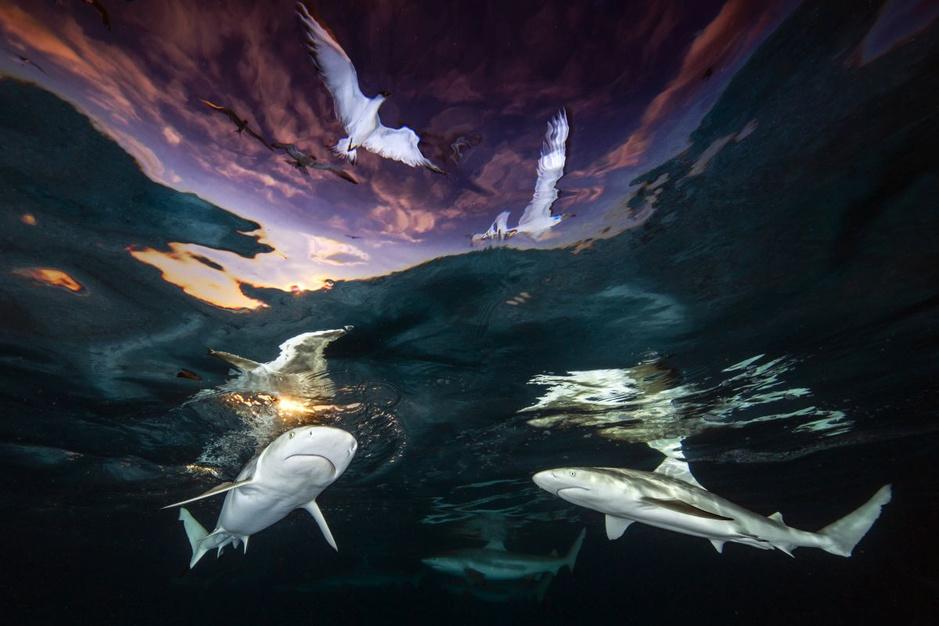 In beeld: de winnaars van de Underwater Photographer of the Year wedstrijd
