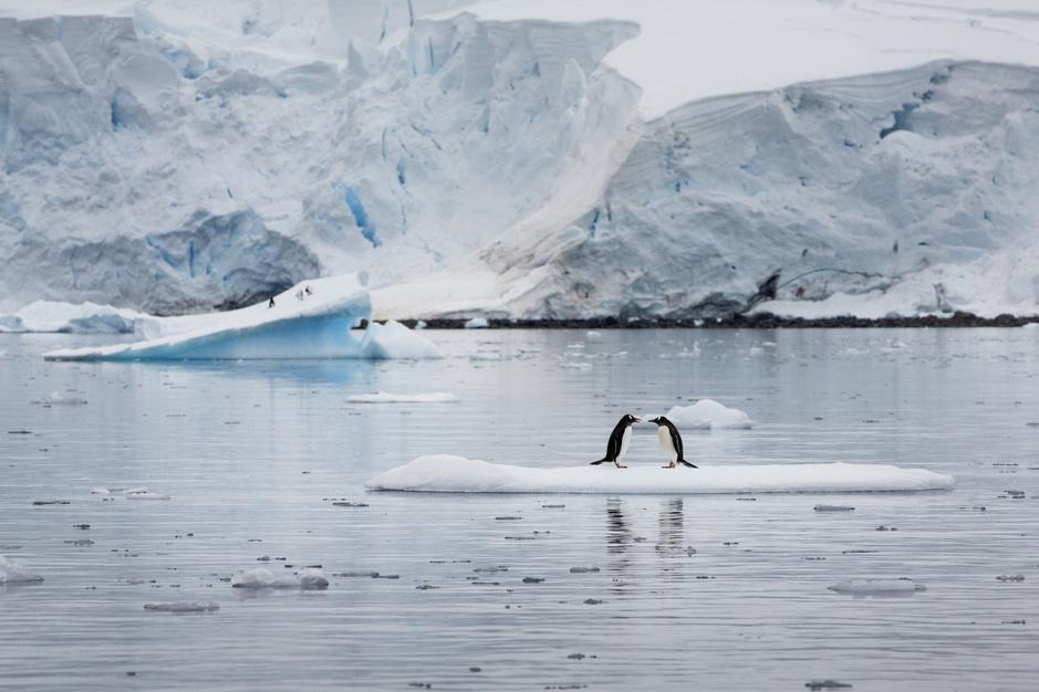 In beeld: dalend aantal pinguïns op Antarctica
