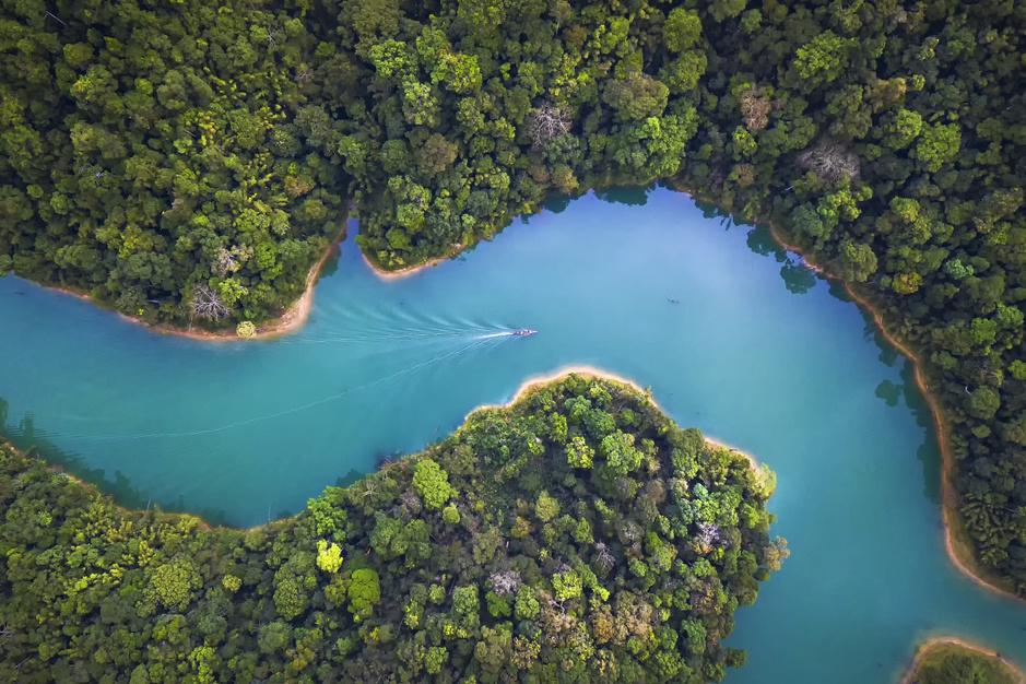 In beeld: 25 van de mooiste bossen ter wereld
