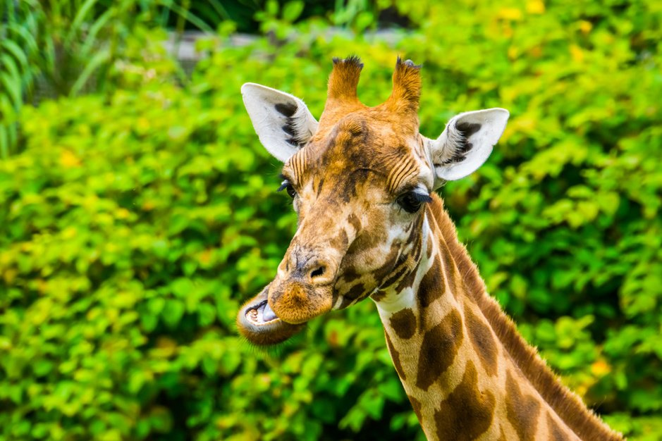 Dierentuinen: een goede zoo moet een Ark van Noah worden