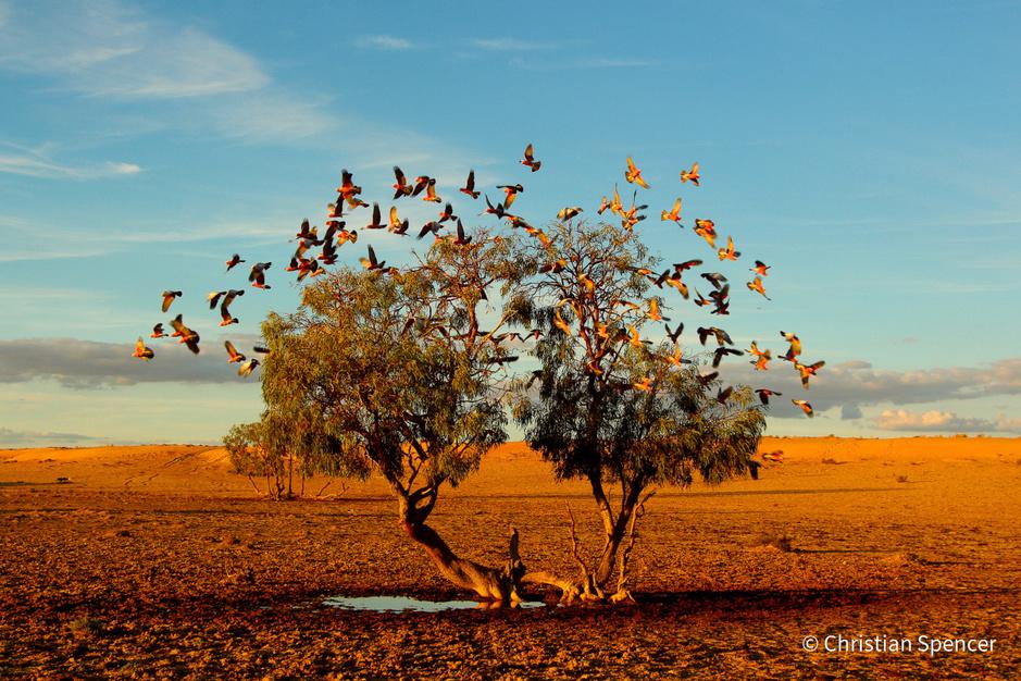 Dit zijn de mooiste natuurfoto's van Australië van 2021