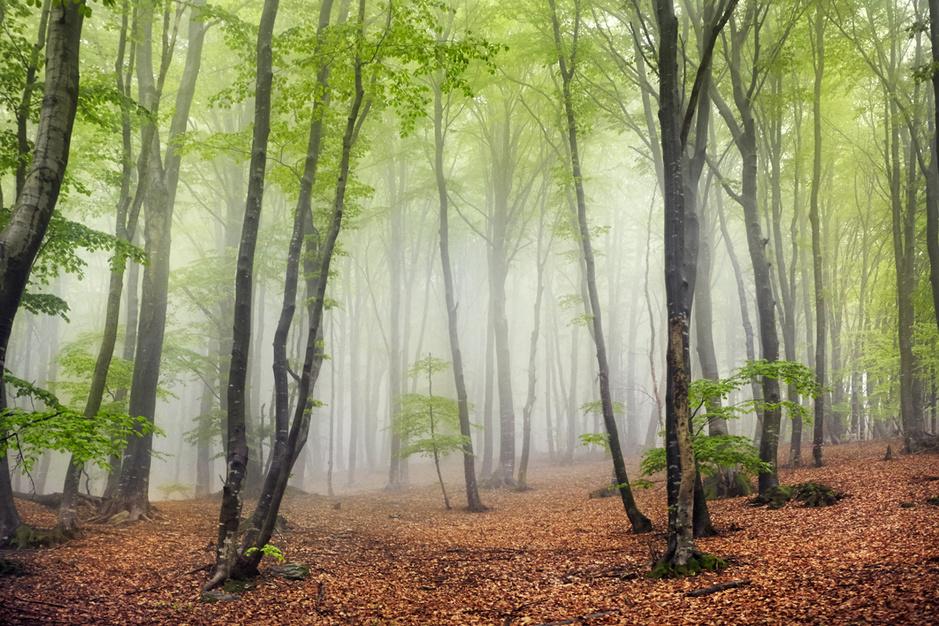 Biologe Sara Vicca ziet de klimaatverandering in het bos: 'De beuk is gedoemd om te verdwijnen'