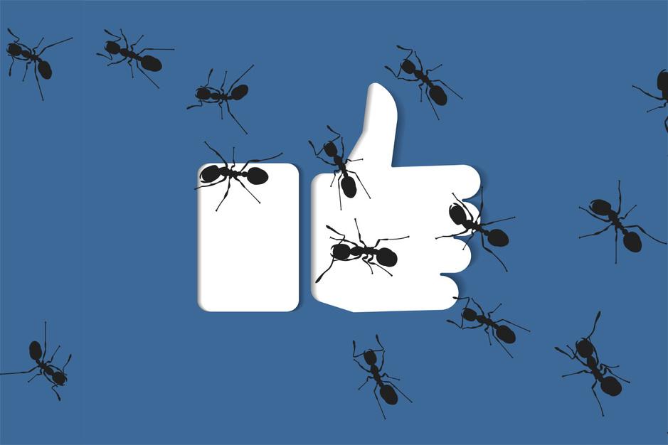 Amusement voor lockdowntijden: speel een mier op Facebook