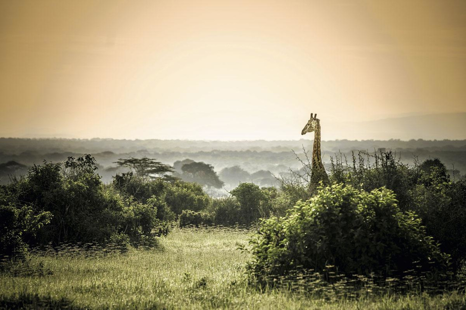 A Taste of Tanzania: een culinaire roadtrip door de Serengeti