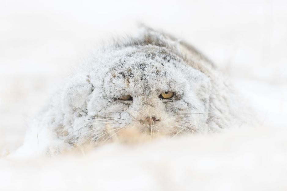 Dit zijn de mooiste natuurfoto's van het jaar: de winnaars van de Nature TTL Photographer of the Year