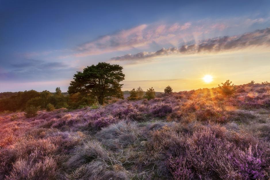Dit zijn de twaalf mooiste natuurgebieden in Nederland