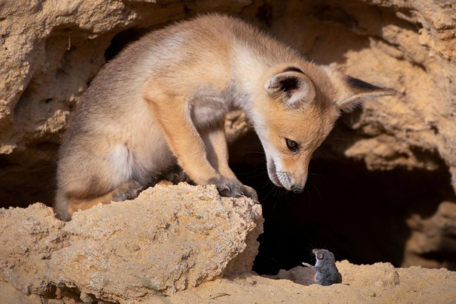 Les photos animalières les plus drôles de l'année