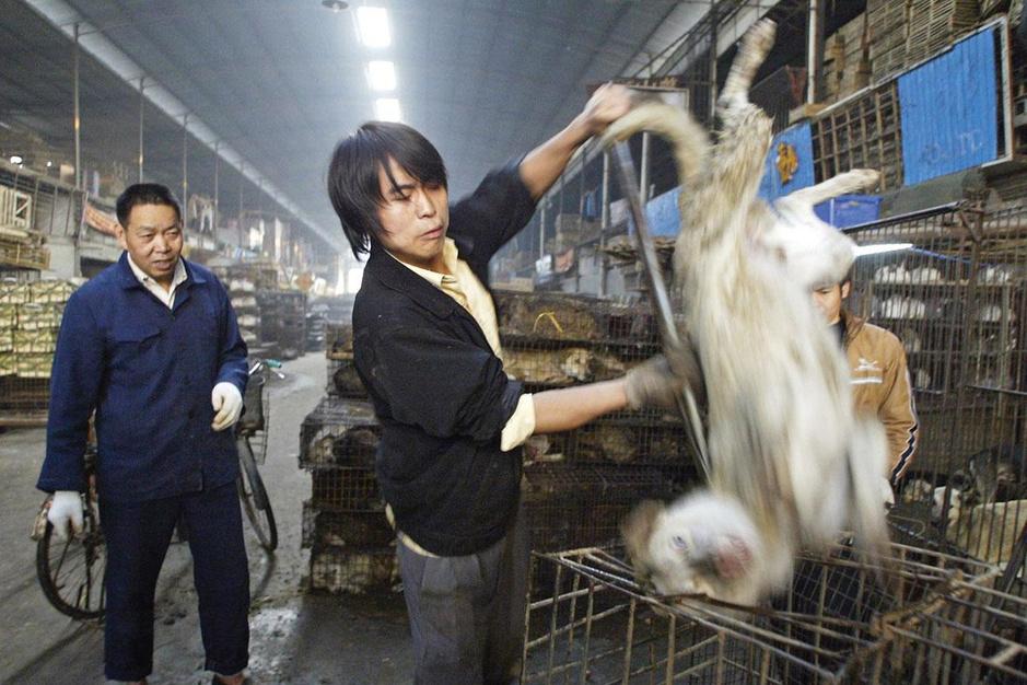 Wet markets: moeten markten met levende dieren verboden worden?