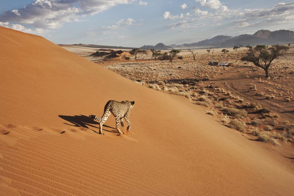 Van Sossusvlei tot Etosha National Park: deze plaatsen moet je zien in Namibië