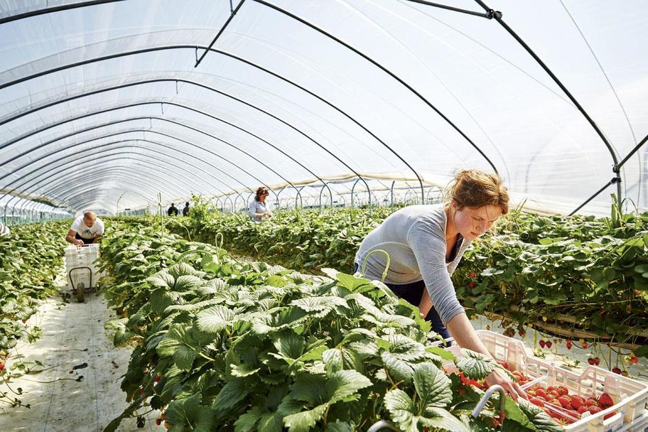 Hoe doorstaan agrocoöperaties de coronastorm?
